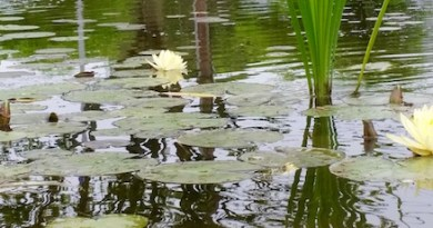 In a Quogue pond...