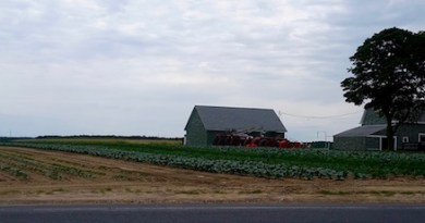 Calverton farmrows...