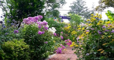 Down the garden path...