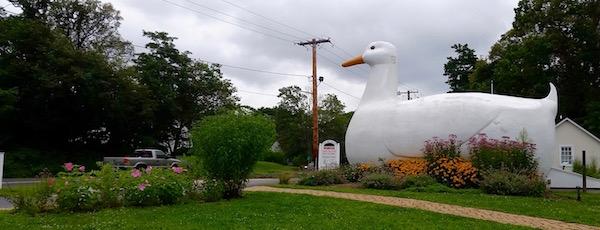 Rainy Day Ducky