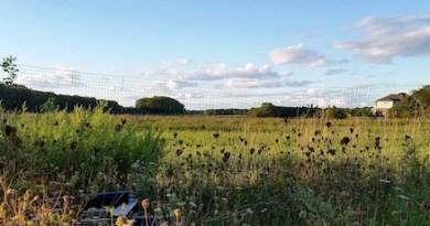 September in the fields...