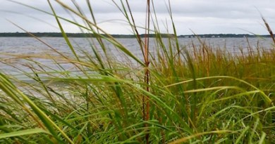 Spartina, Tuesday