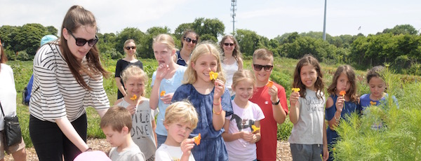 Kids in the W-Kids Program harvesting squash at Amber Waves Farm in Amagansett.