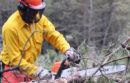DEC Forestry Technician Adam Robedee limbed a tree in the sawyer class at the 2017 New York Wildfire & Incident Management Academy.