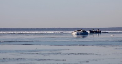 Scalloping in the ice floes, Great Peconic