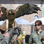 "Jim and Cheryl MacDougall of the Evelyn Alexander Wildlife Rescue Center with red-tailed hawk Sonia and eastern screech owl Archimedes at ""Earth Days"" at Southampton Arts Center Sunday."