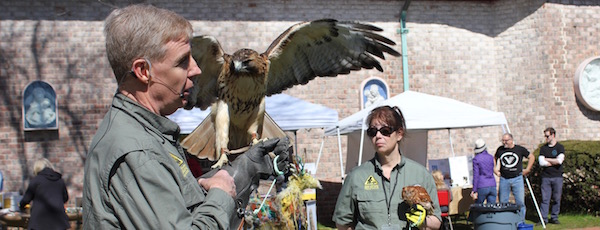 """Jim and Cheryl MacDougall of the Evelyn Alexander Wildlife Rescue Center with red-tailed hawk Sonia and eastern screech owl Archimedes at """"Earth Days"""" at Southampton Arts Center Sunday."""