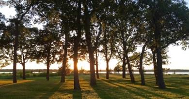 Sylvan Sunset, Flanders