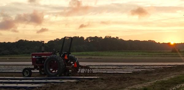 Depot Lane sunset, Cutchogue