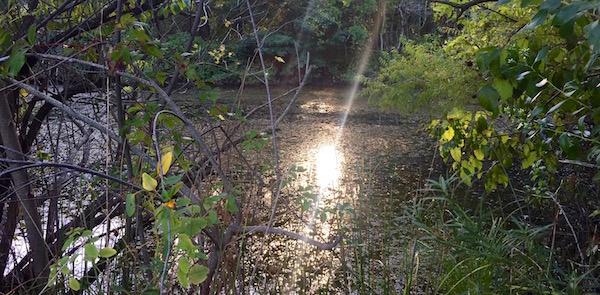 Treasure on Jamesport's Pond