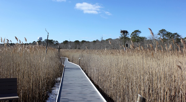 Along the boardwalk through the Quogue Fairy Dell.