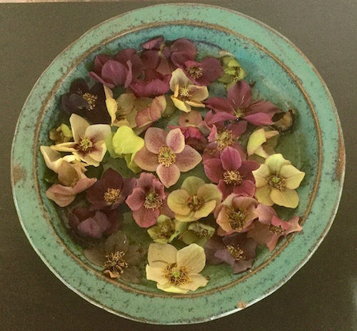 Hellebore blossoms floating in water make an elegant and surprisingly long-lasting decoration.   Erika Shank photo