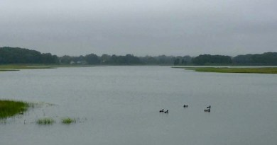 Where the ducks go in summer.