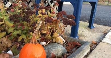 Pumpkin mailbox