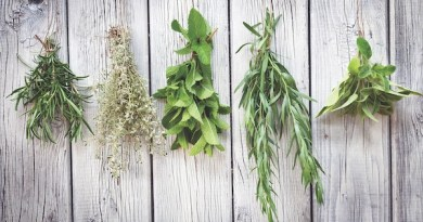 Hanging herbs to dry is one way to prolong summer's bounty past the growing season.