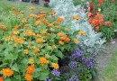 Gardenwise: A New Garden Mindset