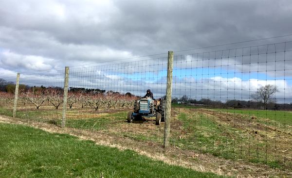 Tilling at Wickham's Farm