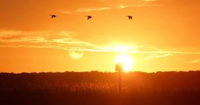 geese_sunrise