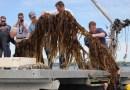 Drawdown: On East End Kelp Farming