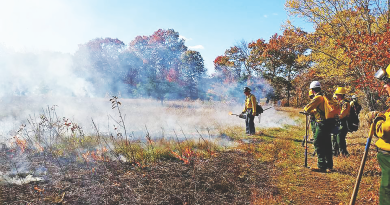 Rx for the Pine Barrens: Fire
