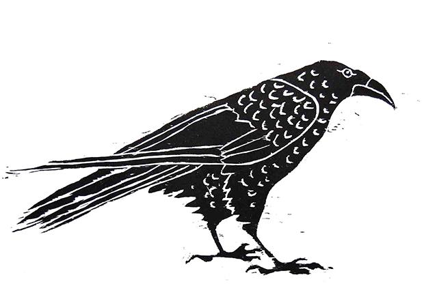 Alice Sielle, Raven facing right 620