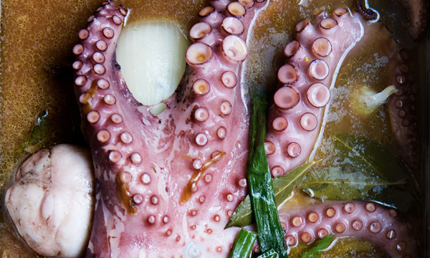 Octopus at Morito