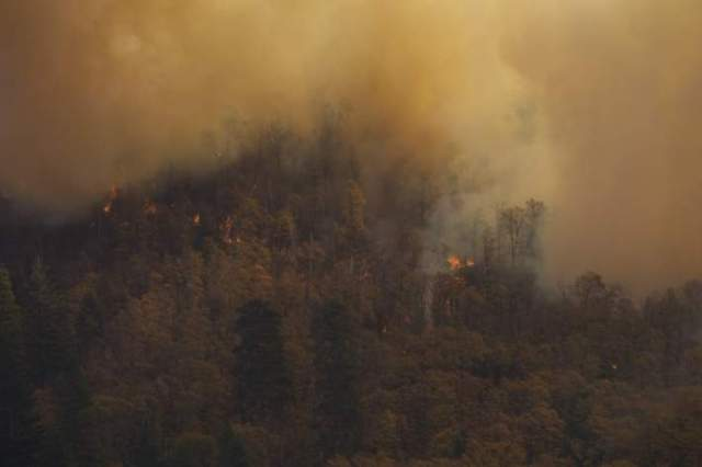 Environmentalists: The risk of new forest fires in Russia is increasing