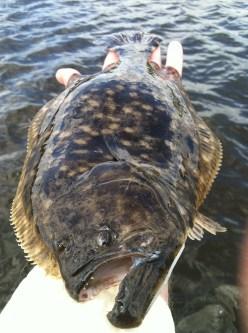 flounder 2