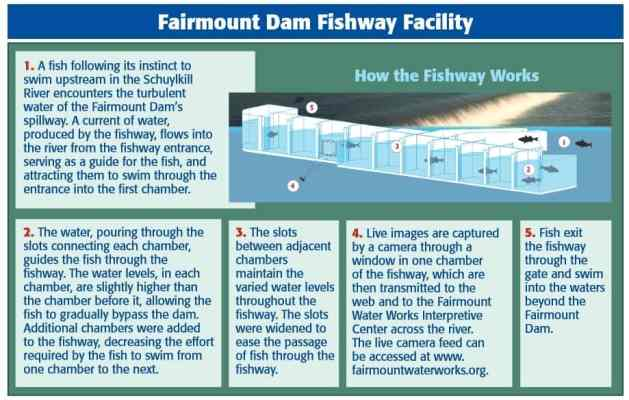 Fairmount Dam Fishway Facility