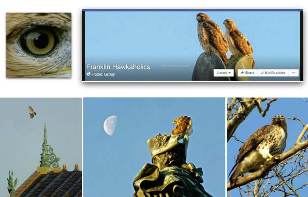 EastFallsLoca facebook hawk collage