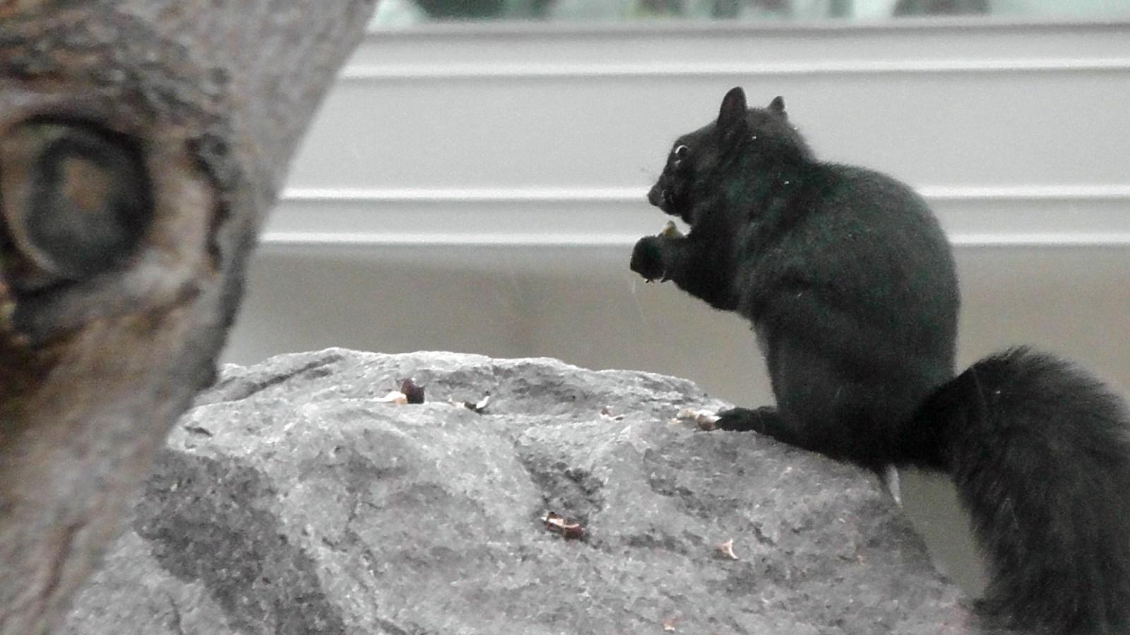 EG Shines - Squirrel
