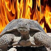 Tortoise sparks house blaze