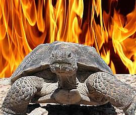 fire tortosie