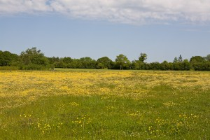 Meadow at Boorley Green, photo Peter Facey