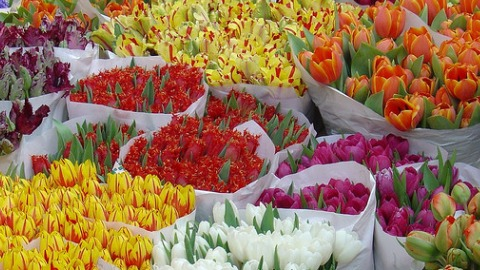 Columbia Road Flower Market. Pic: Twm™ on Flickr