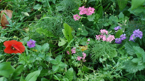 Wild flowers in the Mabley Green meadows. Pic: Nina Pope