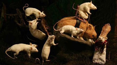 Taxidermy mice. Pic: Amanda Sutton