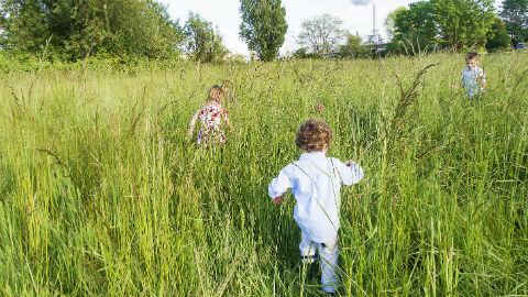 Children play in a meadow Pic: Rose Anna Dana