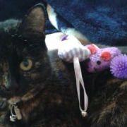 Amber is the latest victim of the Croydon cat serial killer Pic: Wayne Bryant