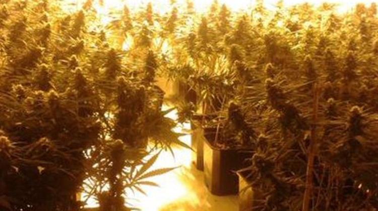 Images of plants taken during the raid. Pic: Metropolitan Police