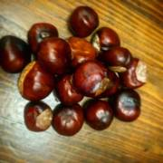 How to get good, hard conkers