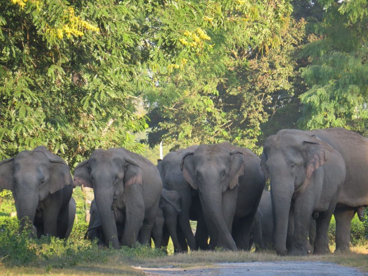 When tigers, elephants, rhinos visit an expanding Indian town
