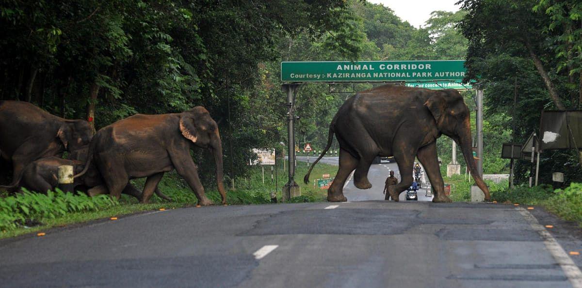 Bee fences helping keep elephants away from human territory: KVIC