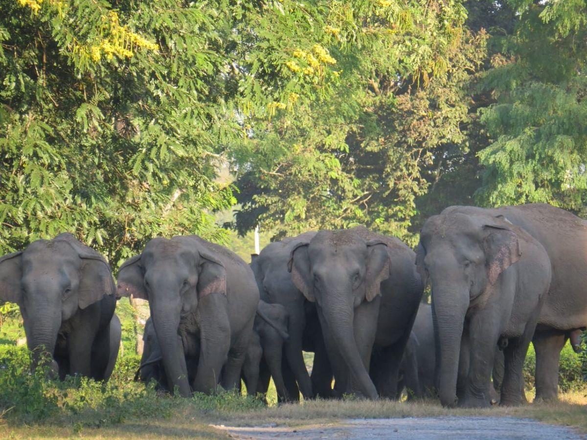Chhattisgarh wild elephants