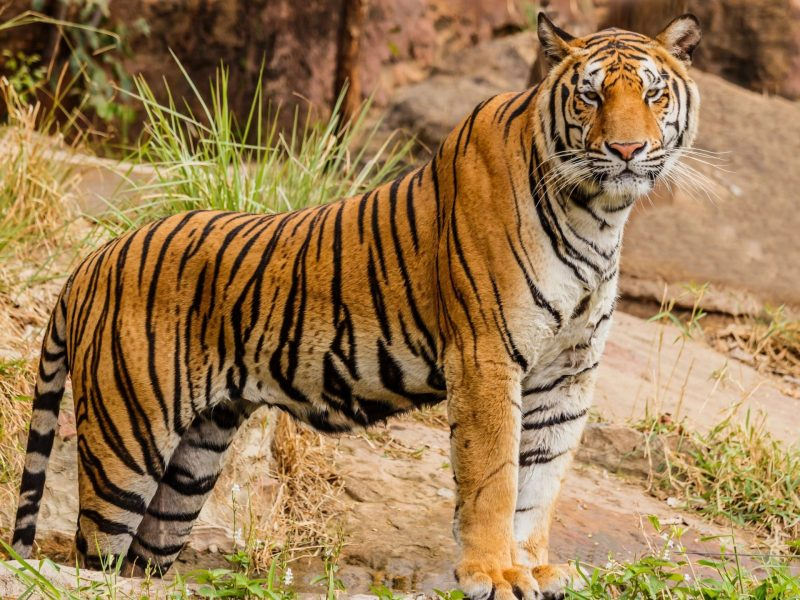 Itanagar Zoo