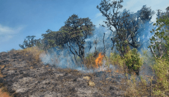 In pics: Manipur's Shirui Peak on fire, IAF to help control it