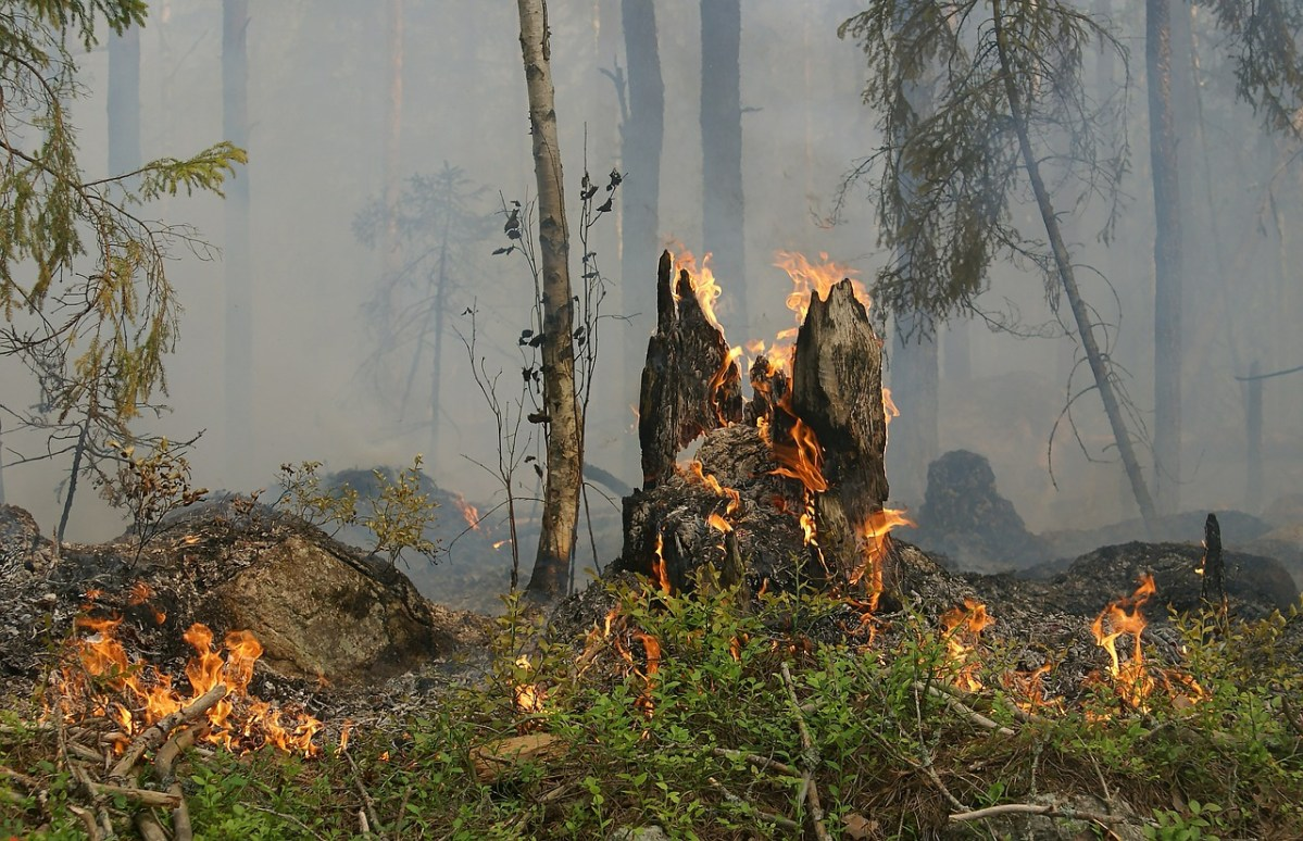 odisha forest fire