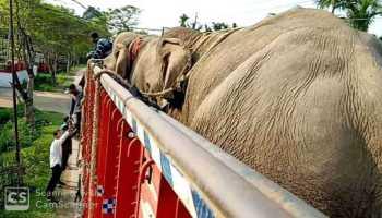 Captive elephants headed to Odisha from Arunachal Pradesh intercepted on NH-38 in Assam's Tinsukia district