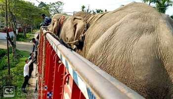 Elephants seized in Assam