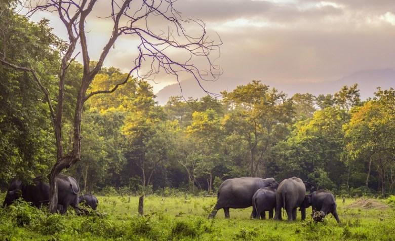 Manas Wildlife Sanctuary, Assam